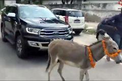 Chủ xe Ấn Độ cho lừa kéo xe Ford đến đại lý biểu tình vì lỗi liên tục