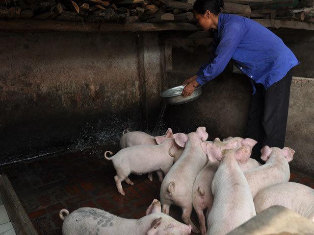 Vụ Bản: Chăn nuôi an toàn sinh học tiếp sức công tác phòng ngừa dịch bệnh cho đàn gia súc