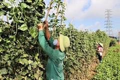 Huyện ở Hà Nội lập hàng trăm tổ tiêu thụ nông sản, người dân yên tâm sản xuất
