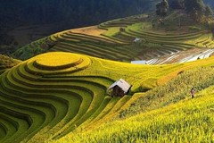 Ha Giang promotes beauty of Hoang Su Phi terraced fields online