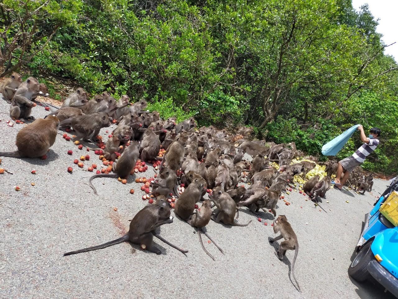 Chàng trai Sài Gòn 2 tháng miệt mài 'tiếp tế' rau củ cho đàn khỉ 1.500 con
