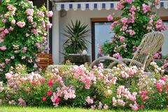 Mãn nhãn nhà vườn 'triệu bông hồng' đẹp như cổ tích của mẹ Việt ở Đức