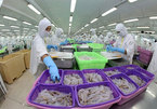 COVID-19 impact starts reflecting in seafood companies' results from August: VDSC