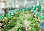 'Tổ bán hàng' đặc biệt, mỗi ngày chốt đơn 1.000 tấn rau quả