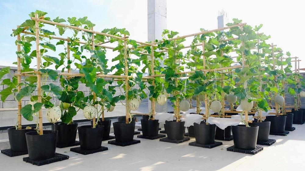 Gia đình Đà Nẵng sống khỏe với vườn sân thượng 150m2 ngày giãn cách