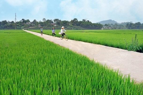 Thái Bình: Xây dựng nông thôn mới nâng cao gắn với cơ cấu lại ngành Nông nghiệp