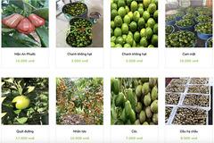Lập trung tâm kết nối tiêu thụ nông sản cho các tỉnh phía Nam, giải quyết ách tắc