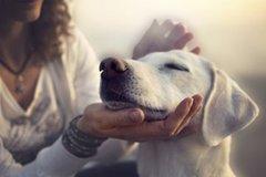 Bộ Y tế: F0 không được tiếp xúc với vật nuôi trong nhà