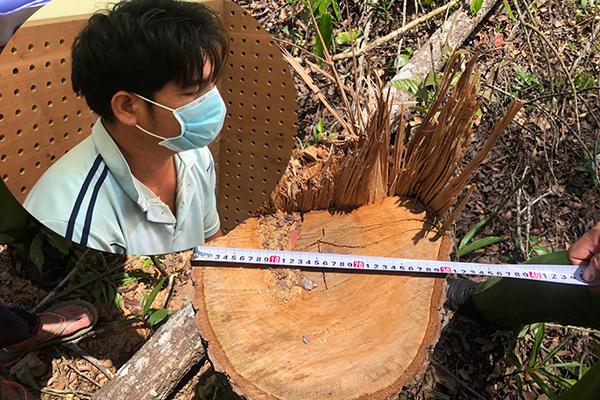 Khởi tố 7 đối tượng hủy hoại rừng ở Đắk Nông bằng thủ đoạn tinh vi