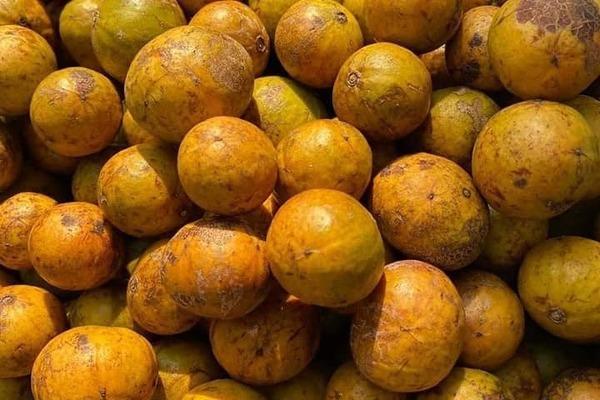 Đặc sản Hà Nội ngày cuối mùa, khách tranh mua ăn dè đến sang năm