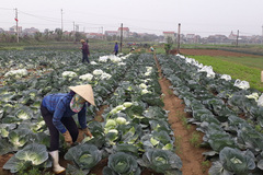 Agriculture Ministry to open new path for farm produce sales