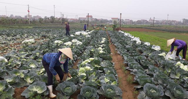 farm produce,digital economy,e-commerce