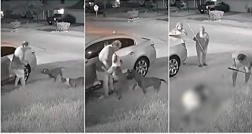 Xác định danh tính ông cụ gốc Á bị 'ác quỷ' pitbull tấn công suýt chết