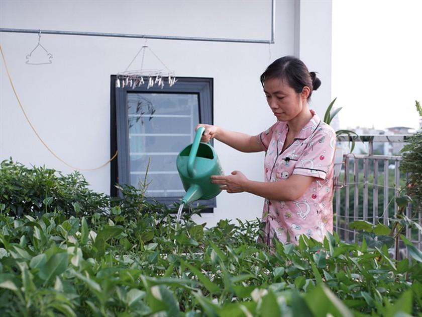 Urban gardens a bright spot during pandemic