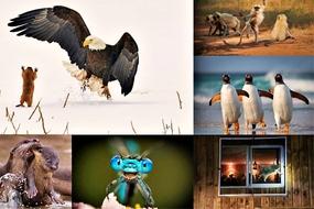 Những bức ảnh hài hước về động vật hoang dã 'bắt' bạn phải bật cười