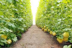 Số hoá nông nghiệp: Con đường để nông sản Việt sớm vượt qua ách tắc