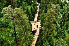 Đường đi bộ trên 'đỉnh ngọn cây' ở Thuỵ Sỹ: Dài nhất thế giới, xuyên 1,5 km rừng