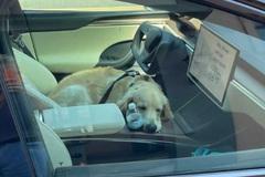 Chủ xe không cần lo lắng nếu để quên chó trên Tesla Model X 2022