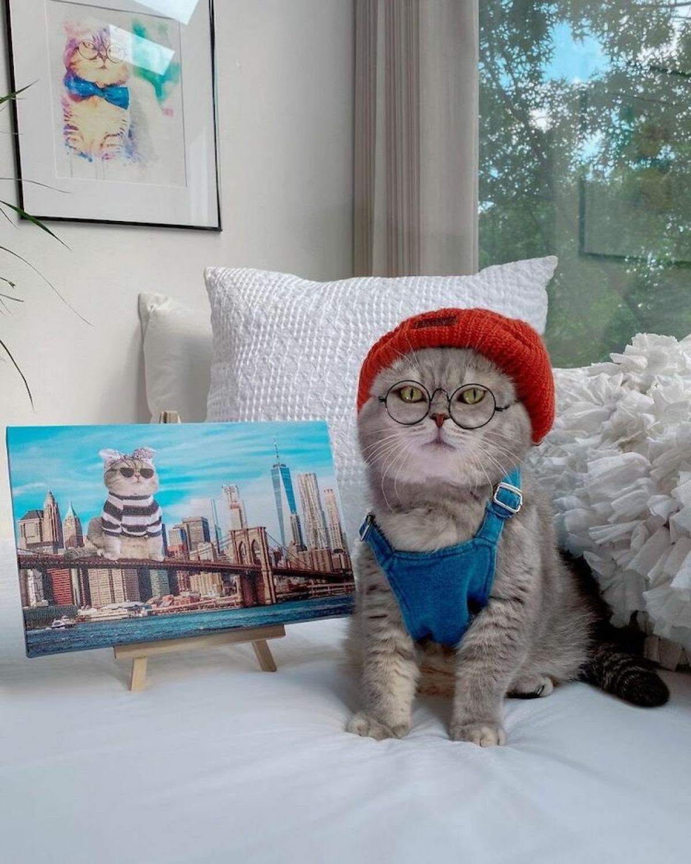 Chú mèo nổi tiếng mạng xã hội với phong cách thời trang sành điệu
