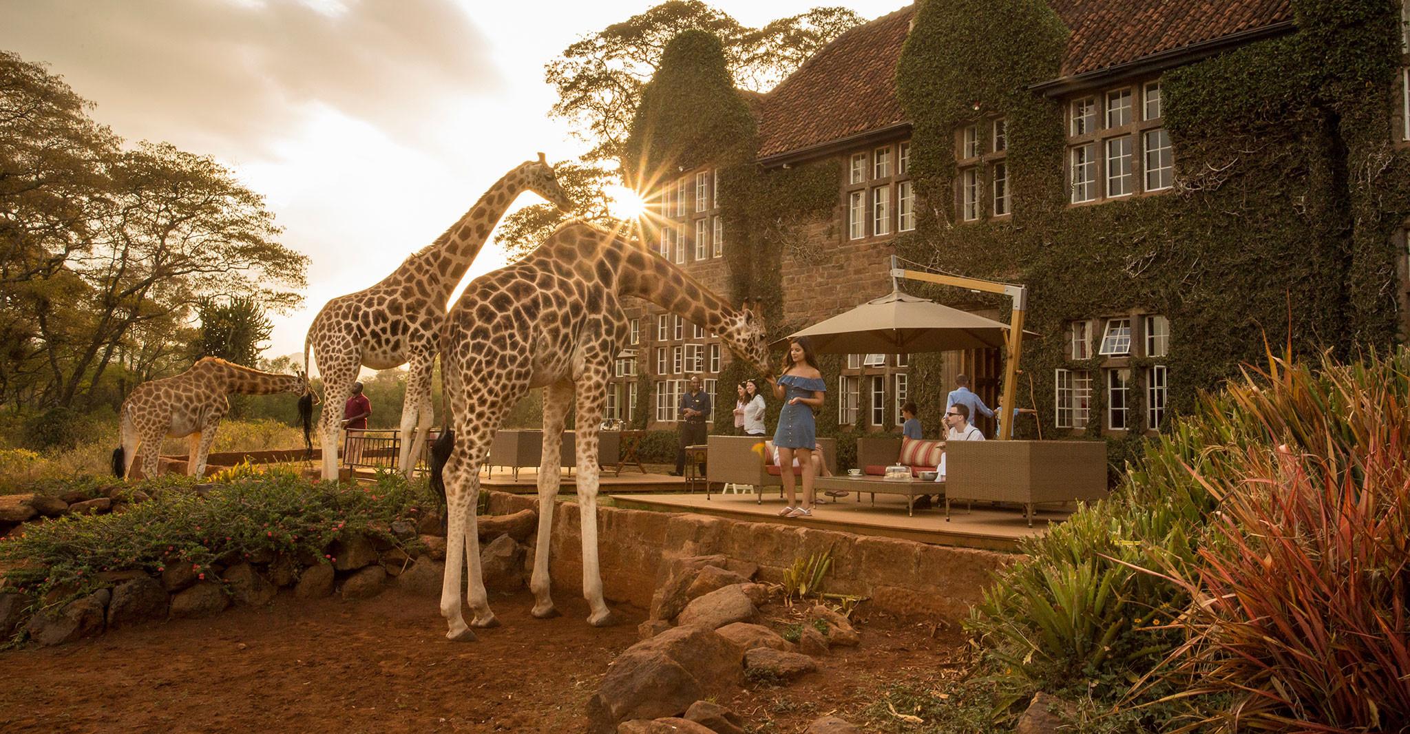 Du lịch châu Phi,Hươu cao cổ