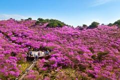 Trải nghiệm thiên nhiên rực rỡ ở Daegu