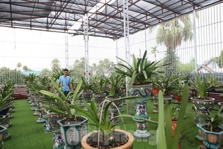 Vườn lan quý hiếm bạc tỷ của chàng kỹ sư tin học bỏ phố về quê