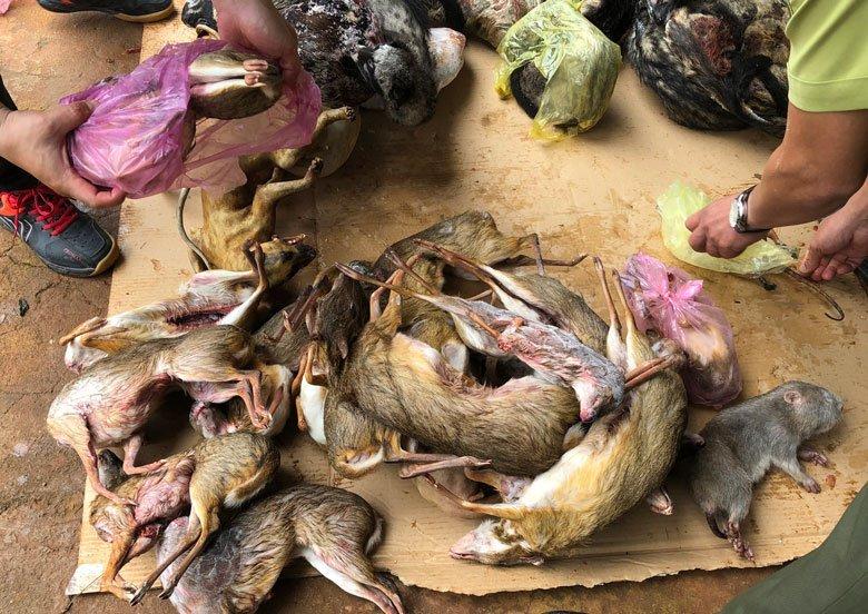 Phát hiện 3 tủ chất kín xác động vật bên trong ở Lâm Đồng