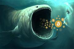 """""""Cá mập"""" Bitcoin tỉnh giấc đe dọa thị trường tiền mã hóa?"""