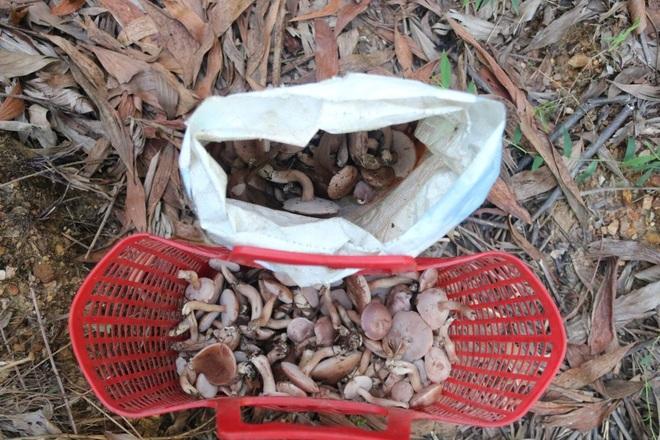 Mùa nấm tràm tại Huế