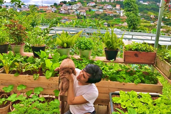 Chán phố về Đà Lạt mở homestay, chàng trai tự tay làm khu vườn 'trên mây' xanh mướt