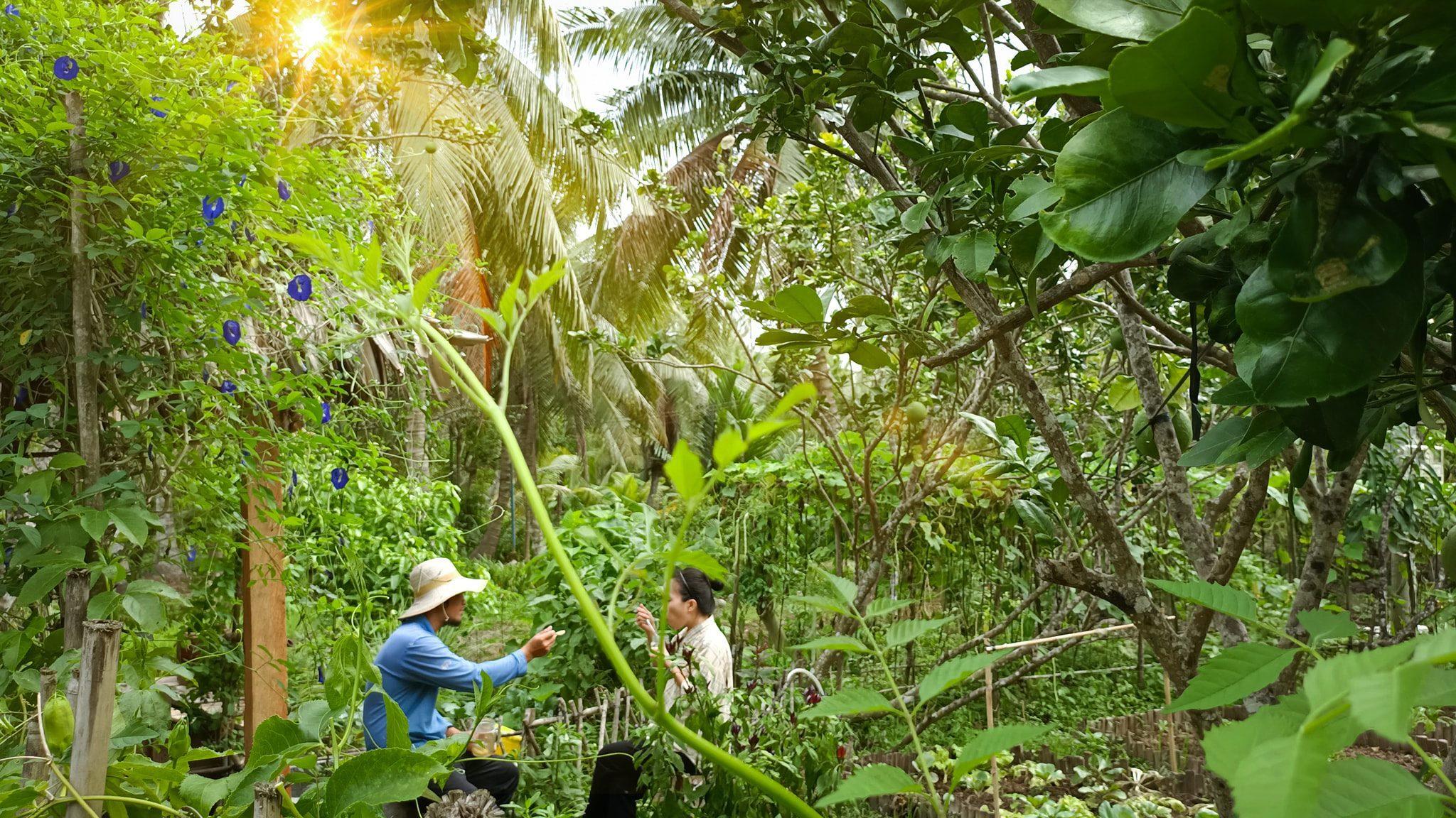 Cặp đôi Bến Tre 'bỏ phố về quê' làm nông trại 500 m2 đẹp như khu du lịch