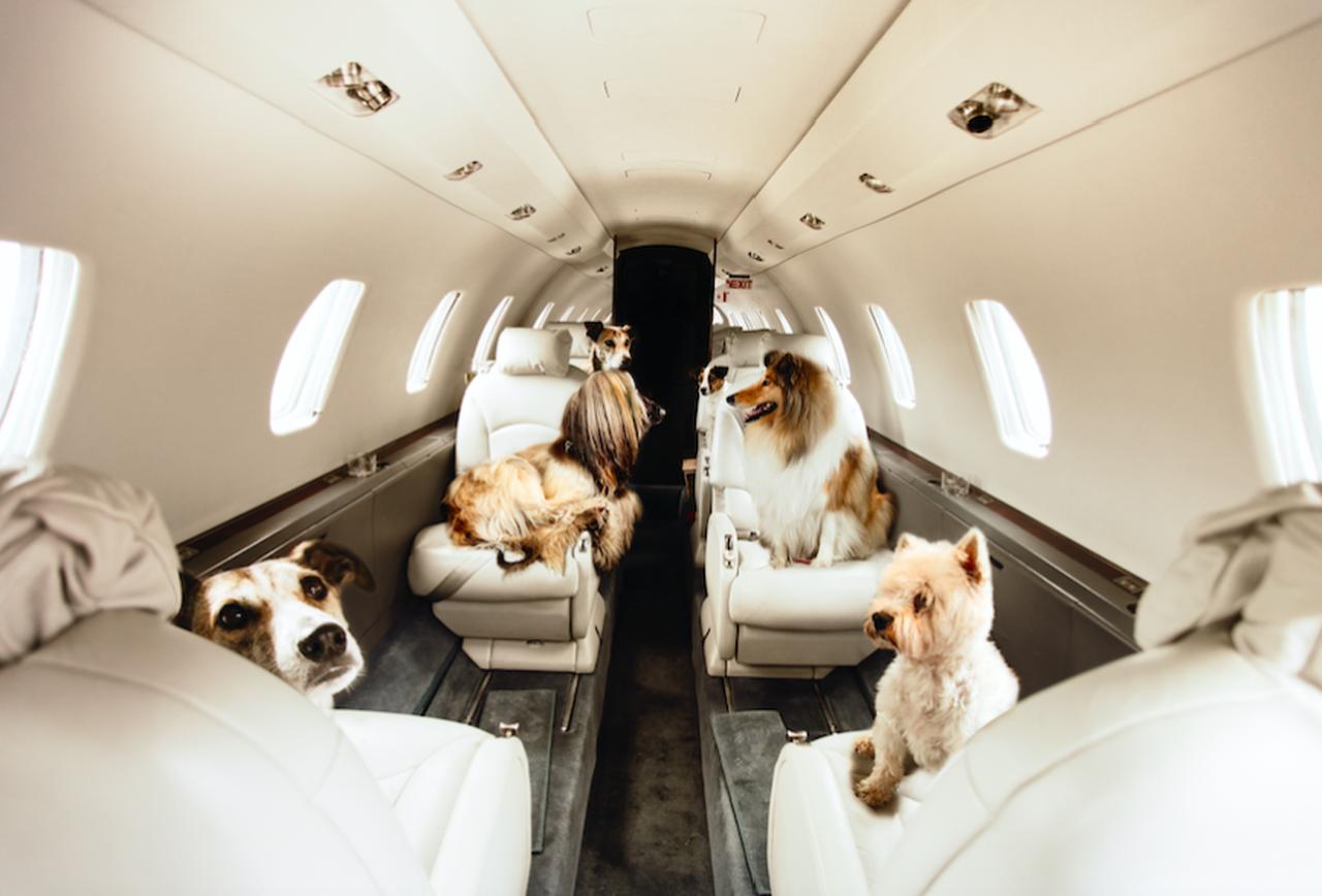 Trào lưu đưa thú cưng đi du lịch bằng máy bay riêng nở rộ trong đại dịch