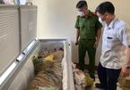 Công an phát hiện vụ giữ hộ cá thể hổ trong tủ cấp đông tại Hà Tĩnh