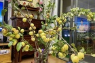 Thay cắm hoa tươi, táo mèo cả cành được ưa chuộng bất ngờ
