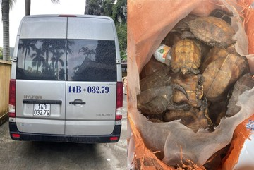 Xe khách vận chuyển 34 cá thể rùa quý trong sách đỏ thế giới