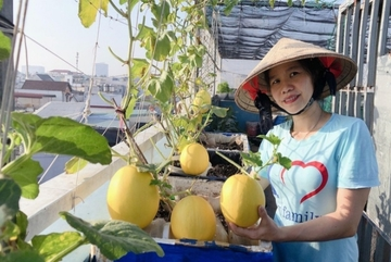 Vườn rau trái 'đỉnh cao' trên sân thượng ở Đồng Nai