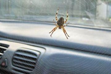 Nữ tài xế Hyundai Elantra gặp tai nạn chỉ vì một con nhện