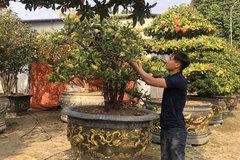 Làm giàu từ trồng hoa, cây cảnh lạ