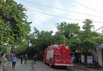 Cây đa 200 tuổi ở Quảng Ngãi bật gốc, đổ đè người đi đường tử vong