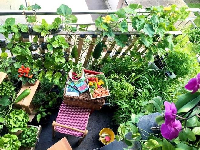 Nữ đầu bếp 'mát tay' biến 2,5m2 thành vườn xanh mát giữa phố thị