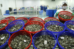 Seafood exports plummet under social distancing regulations