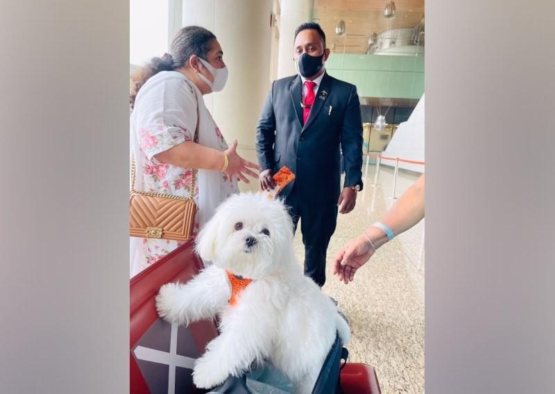 Thuê cả khoang thương gia để chó cưng được đi máy bay