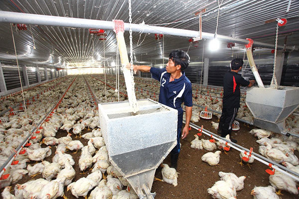 Farmers feeling the pinch of current supply chain obstacles