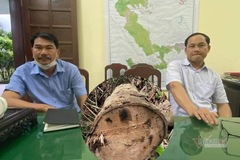 Tỉnh TT-Huế chỉ đạo làm rõ vụ rừng cổ thụ A Lưới bị 'xẻ thịt'