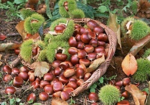 Món ngon nức tiếng ở tỉnh xanh Cao Bằng, có món mỗi năm chỉ mua được một lần