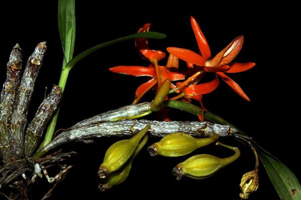 Nui Chua National Park,Global Biosphere Reserves