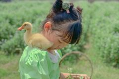 Thú vui mới ở phố: Ấp trứng, nuôi vịt trên ban công, vườn nhà