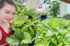Chi gần chục triệu đồng, mẹ đảm ở TP.HCM làm vườn sum suê trên sân thượng