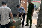 Xe 'luồng xanh' vận chuyển 7 tấn nầm lợn không nguồn gốc