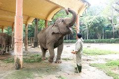 SaiGon Zoo askscity for financial support